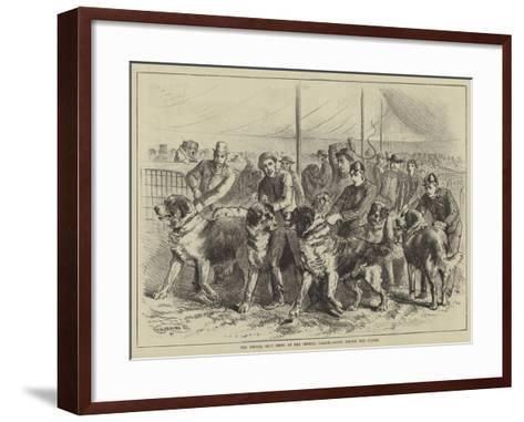 The Kennel Club Show at the Crystal Palace, Going before the Judges--Framed Art Print