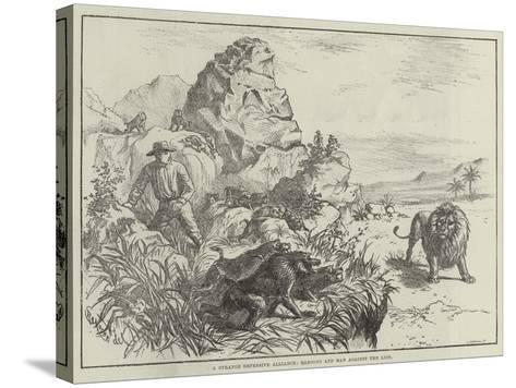 A Strange Defensive Alliance, Baboons and Man Against the Lion--Stretched Canvas Print