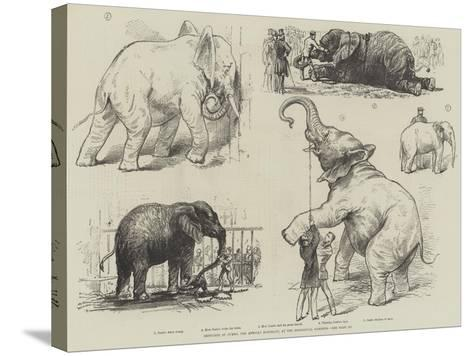 Sketches of Jumbo, the African Elephant, at the Zoological Gardens--Stretched Canvas Print