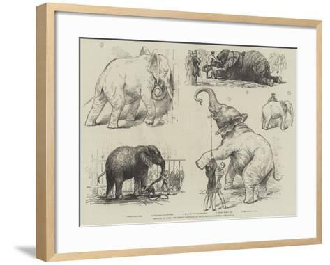 Sketches of Jumbo, the African Elephant, at the Zoological Gardens--Framed Art Print