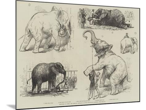 Sketches of Jumbo, the African Elephant, at the Zoological Gardens--Mounted Giclee Print
