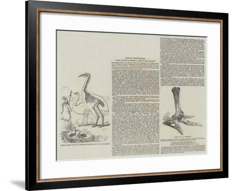 Fossil Remains of Colossal Birds of New Zealand--Framed Art Print