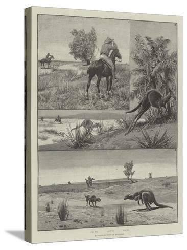 Kangaroo-Hunting in Australia--Stretched Canvas Print
