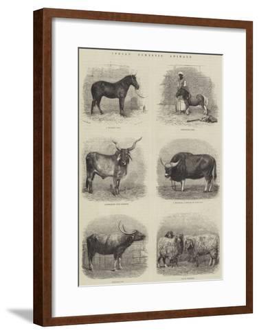 Indian Domestic Animals--Framed Art Print
