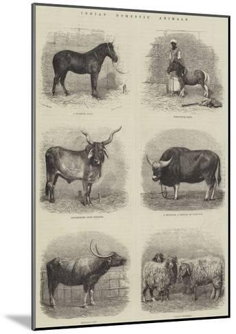 Indian Domestic Animals--Mounted Giclee Print