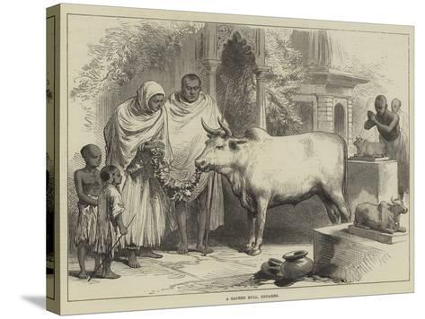 A Sacred Bull, Benares--Stretched Canvas Print