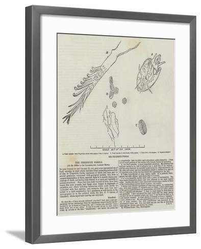 The Tingewick Fossils--Framed Art Print