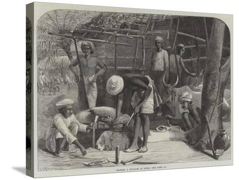 Shoeing a Bullock in India--Stretched Canvas Print