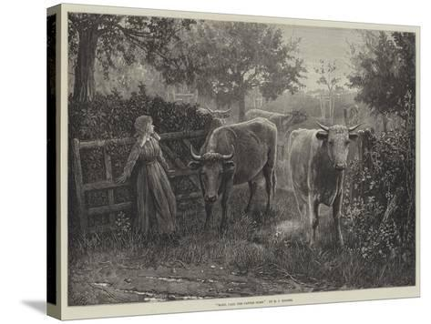 Mary, Call the Cattle Home--Stretched Canvas Print