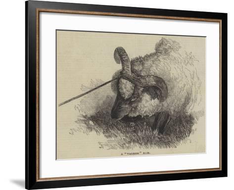 A Vagrom Ram--Framed Art Print
