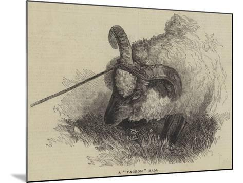 A Vagrom Ram--Mounted Giclee Print