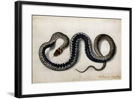 A Grass Snake, C.1675-1700--Framed Art Print