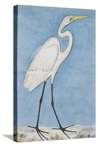 A Great Egret, Lucknow, C.1790--Stretched Canvas Print