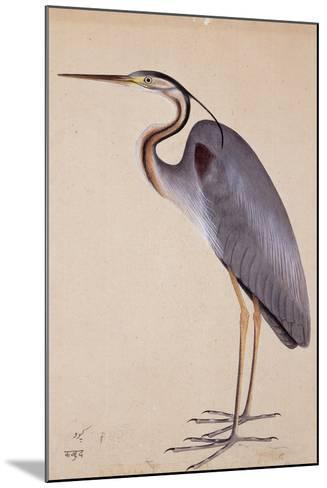 A Heron, C. 1820--Mounted Giclee Print