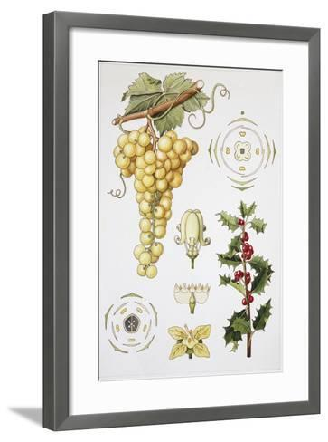 Celastrales and Rhamnales--Framed Art Print