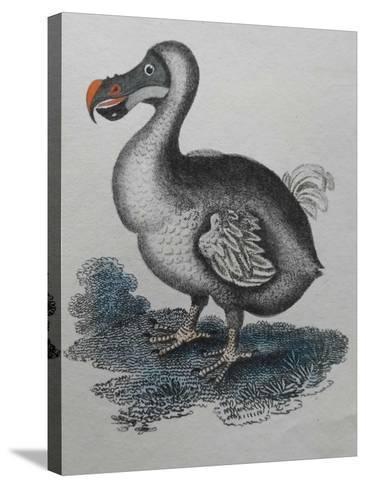 Dodo--Stretched Canvas Print