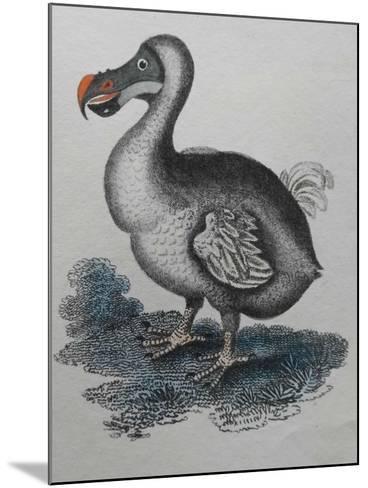 Dodo--Mounted Giclee Print