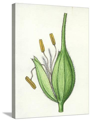 Botany, Poaceae or True Grasses, Scheme of the Flower--Stretched Canvas Print