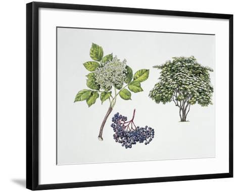Close-Up of a Bunch of Elderberries with a Branch and Shrub--Framed Art Print