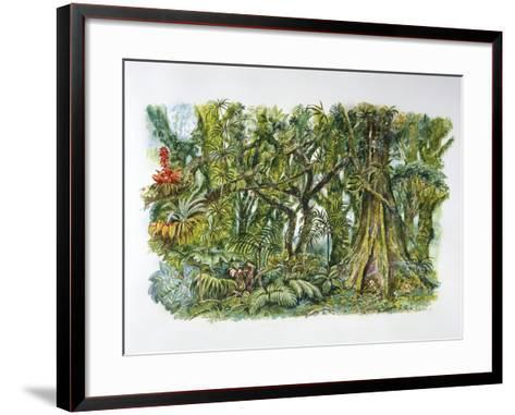 Natural Environments - African Misty Forest--Framed Art Print