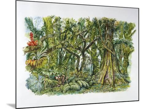 Natural Environments - African Misty Forest--Mounted Giclee Print