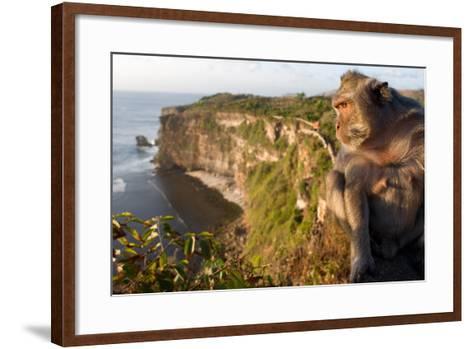 Monkeys Along the Cliffs Next to the Ulu Watu Temple Pura Luhur, Bali--Framed Art Print