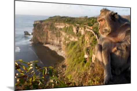 Monkeys Along the Cliffs Next to the Ulu Watu Temple Pura Luhur, Bali--Mounted Photographic Print