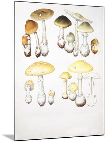 Mushrooms--Mounted Giclee Print