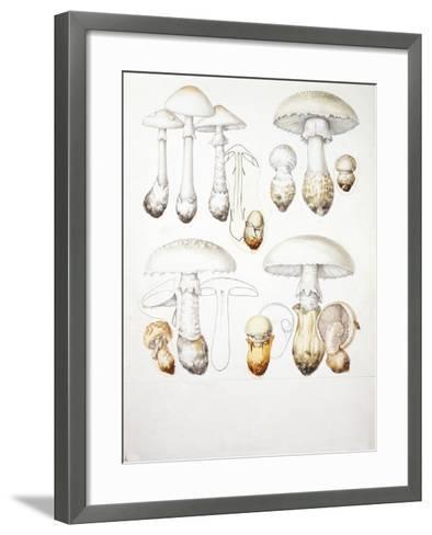 Mushrooms--Framed Art Print