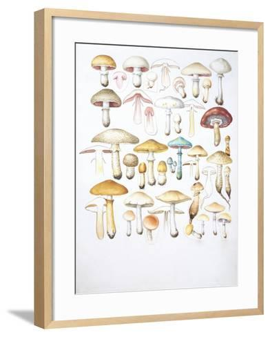 Mushrooms--Framed Art Print