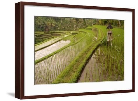 Rice Field, Near the Town of Bangli. Ubud. Bali--Framed Art Print