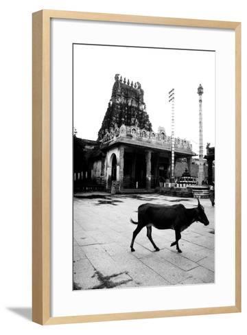 Cow and Poles in Kanchipuram Temple, Tamil Nadu, India, 1979--Framed Art Print