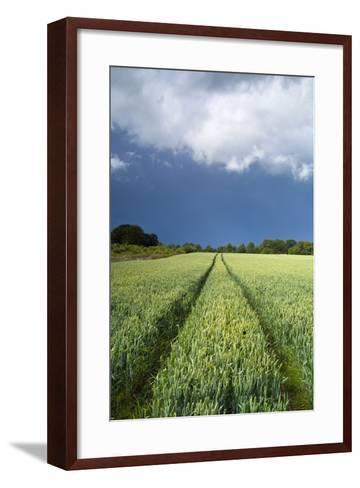 Wheatfield with Tractor Track, Near Belsay, Northumberland, UK--Framed Art Print