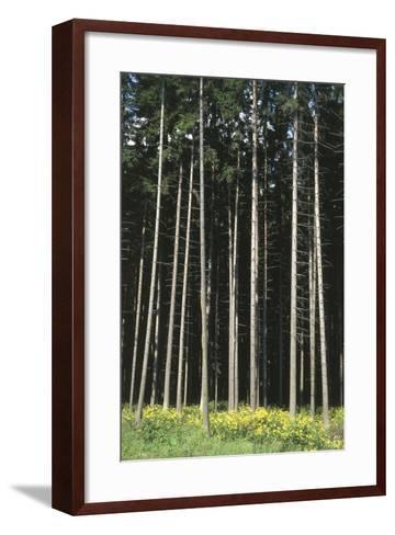 Forest, Moravia, Czech Republic--Framed Art Print