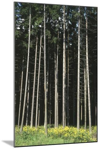 Forest, Moravia, Czech Republic--Mounted Photographic Print