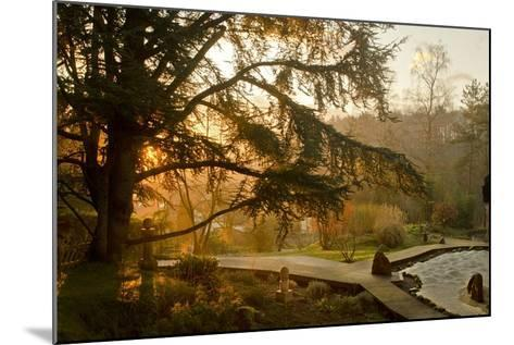 The Garden in the Morning at Zen Temple Ryumonji--Mounted Photographic Print