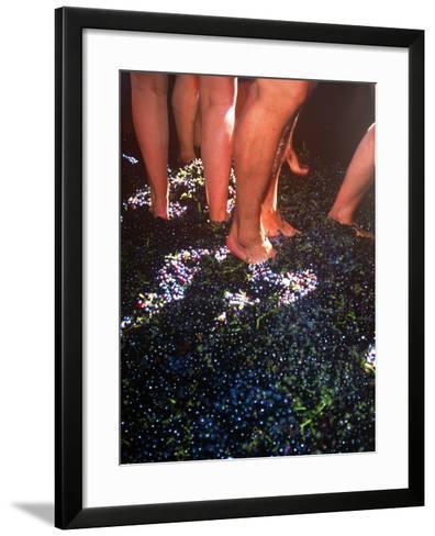 Wine Harvest Festival, Camara De Lobos, Madeira, Portugal--Framed Art Print