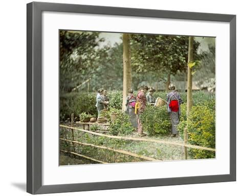 Picking Tea, C.1880--Framed Art Print