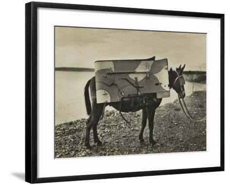 7.5Cm 1930 Model Bofors Mountain Gun Carried by a Mule, 1930--Framed Art Print