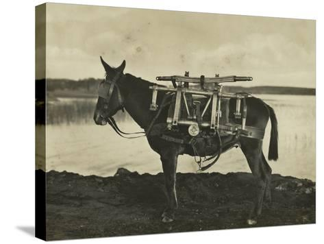 7.5Cm 1930 Model Bofors Mountain Gun Carried by a Mule, 1930--Stretched Canvas Print