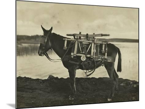 7.5Cm 1930 Model Bofors Mountain Gun Carried by a Mule, 1930--Mounted Photographic Print