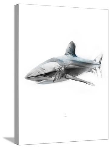 Shark 1-Alexis Marcou-Stretched Canvas Print