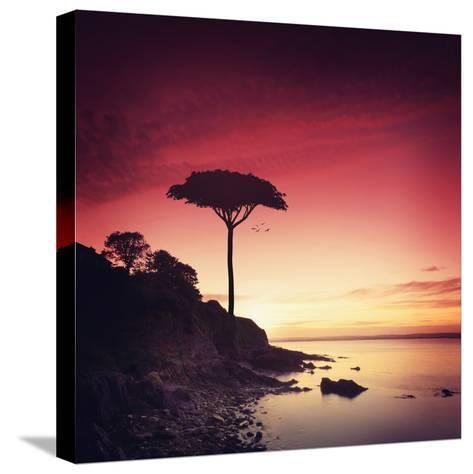 Make it Real for Me-Philippe Sainte-Laudy-Stretched Canvas Print