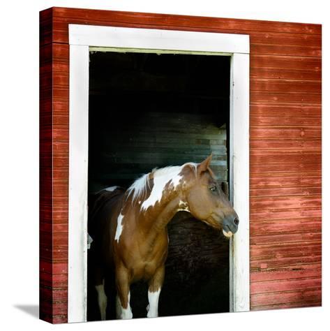Palouse Horse-Ursula Abresch-Stretched Canvas Print