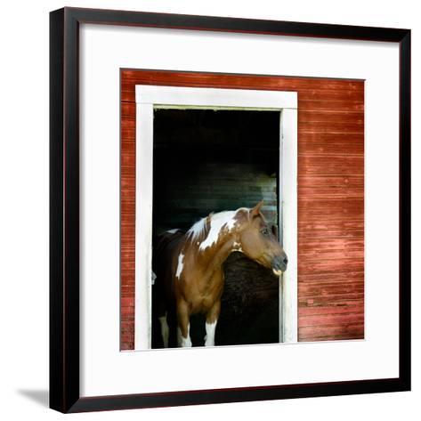 Palouse Horse-Ursula Abresch-Framed Art Print