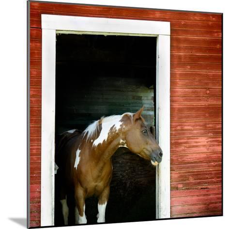 Palouse Horse-Ursula Abresch-Mounted Photographic Print