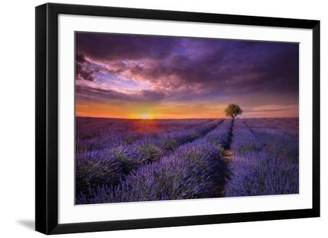 Lavender at Sunset-Marco Carmassi-Framed Art Print