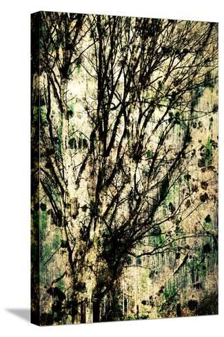 As Old as Time-Ursula Abresch-Stretched Canvas Print