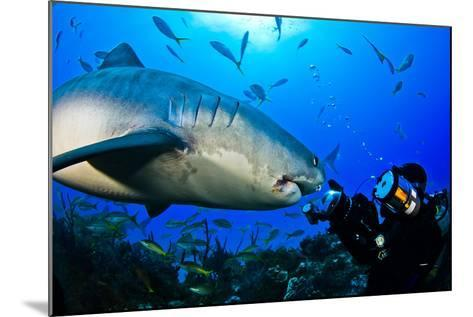 A Tiger Shark Approaching a Diver on a Reef-Jim Abernethy-Mounted Photographic Print