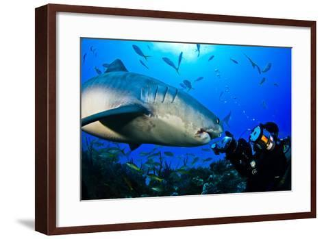 A Tiger Shark Approaching a Diver on a Reef-Jim Abernethy-Framed Art Print